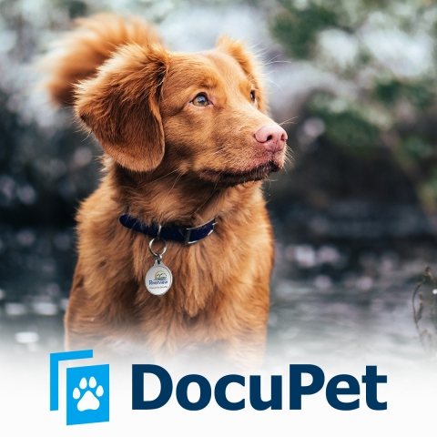 Dog wearing pet licence tag above DocuPet logo